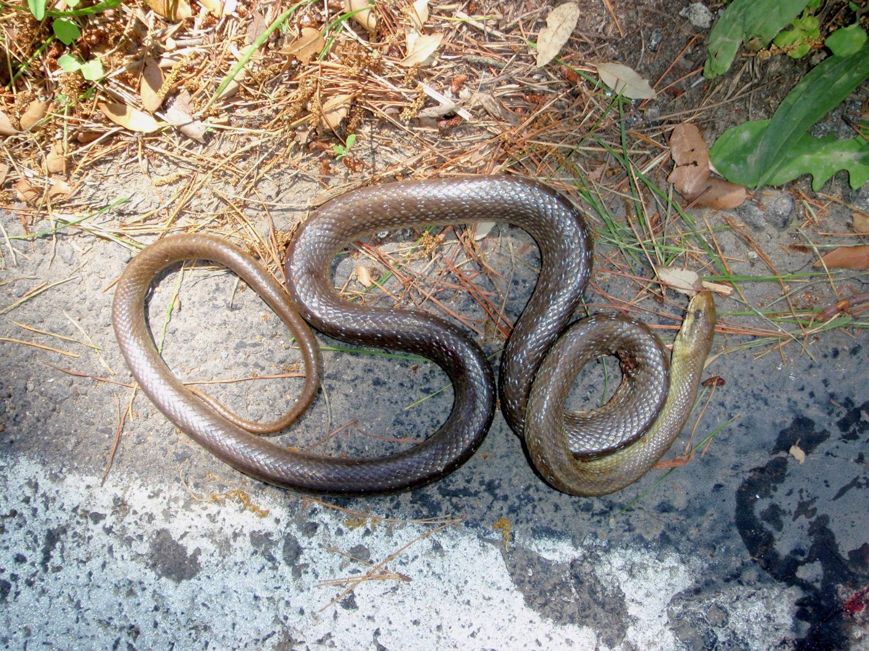 Eek! A snake!